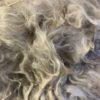 Raw Suri Fleece – White Baby Fine 31 cm